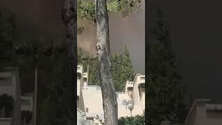 Marmaris'te Orman Yangını! Alevler Bir Anda Büyüdü