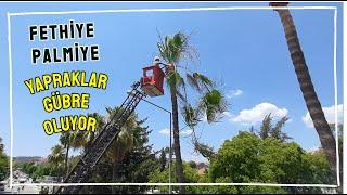 Fethiye'de Palmiyelerin Yaprakları Gübre Oluyor